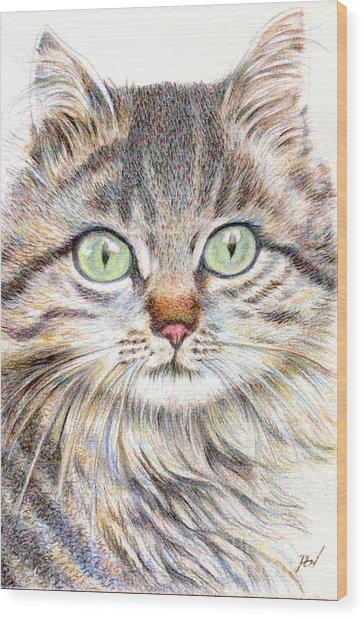 A Handsome Cat  Wood Print