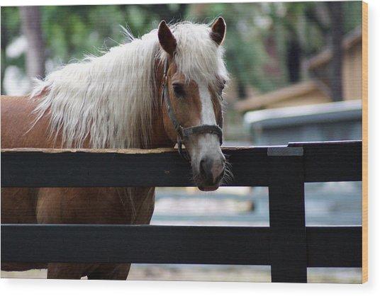 A Hilton Head Island Horse Wood Print