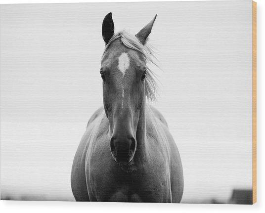 A Horse In A Field Wood Print by Jordan Siemens