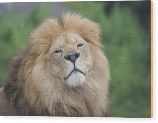 A King's Smile Wood Print by Leigh Ann Hartsfield
