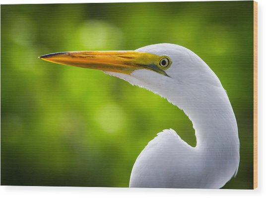 A Lighter Version Of A Snowy Egret Wood Print by Andres Leon