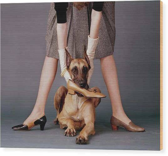 A Model With A Dog Holding A Shoe In Its Mouth Wood Print by John Rawlings
