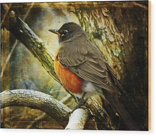 A Moment For Mother Robin Wood Print
