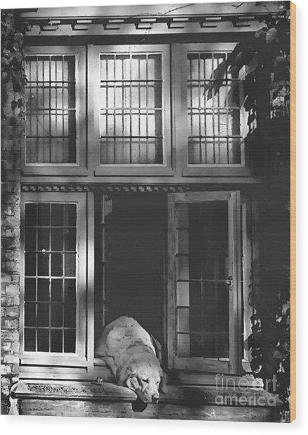 A Nap In The Sun Bw Wood Print