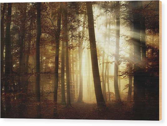 A New Day Wood Print by Norbert Maier