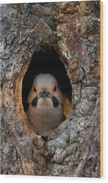 A Northern Flicker In The Hollow Wood Print