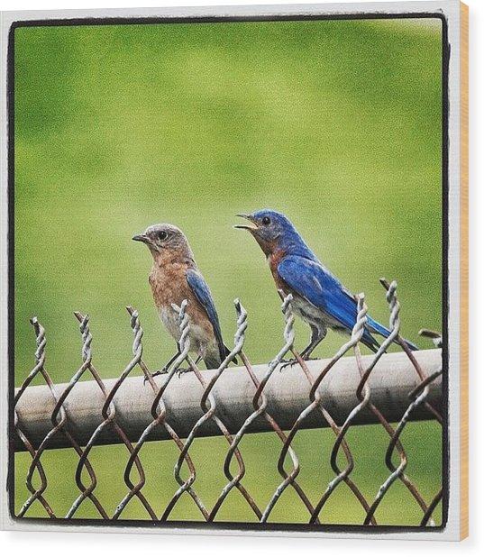 Nesting Bluebirds Wood Print