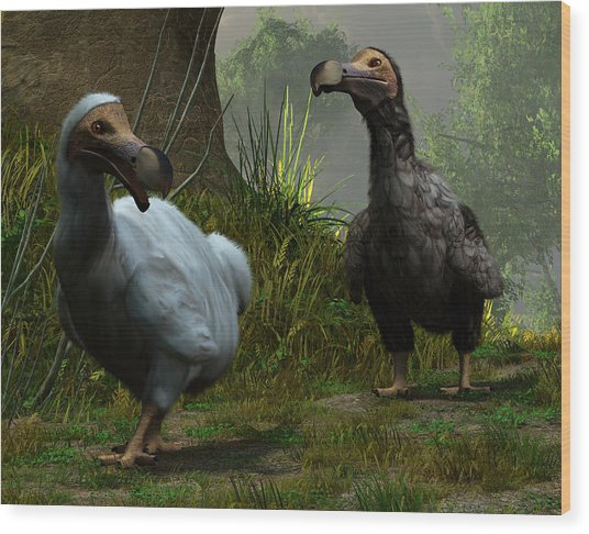 A Pair Of Dodos Wood Print