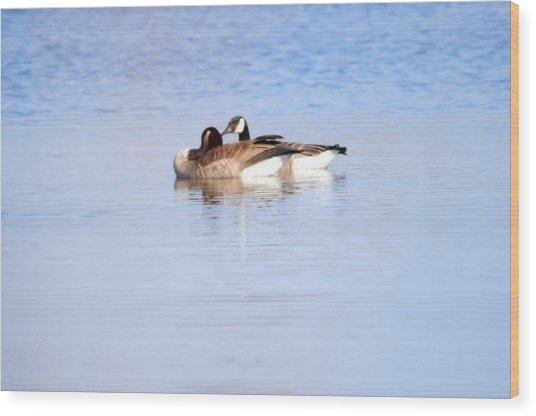 A Pair Of Geese Wood Print by Valarie Davis
