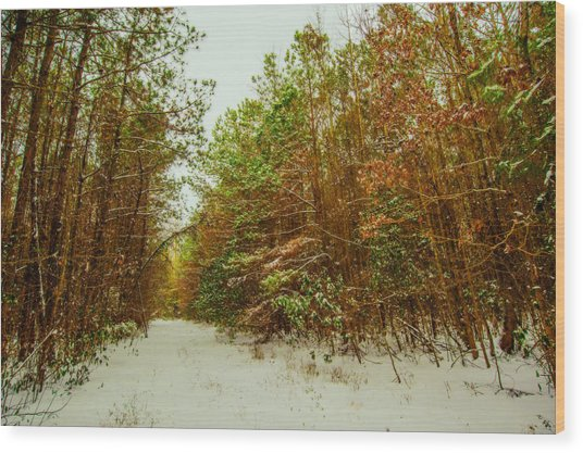 A Path In Winter  Wood Print