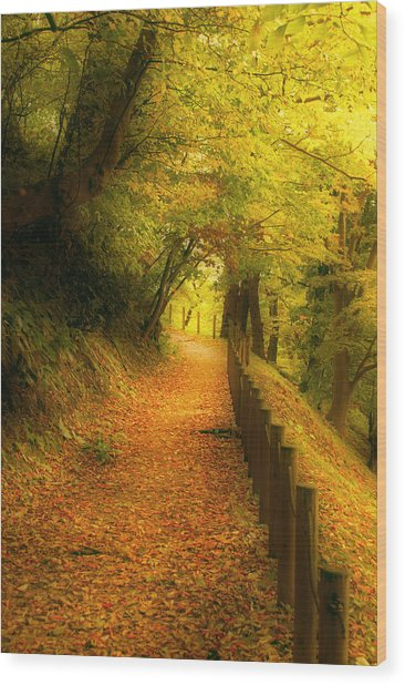 A Path Well Chosen Wood Print