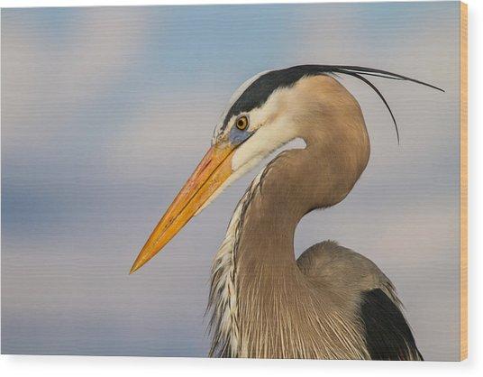 A Pensive Blue Heron Wood Print
