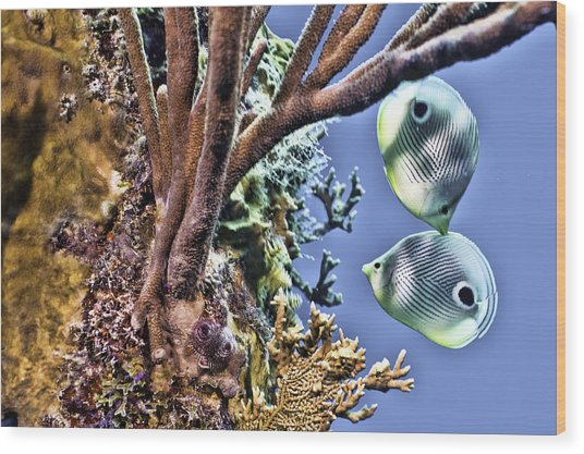 Two Butterfly Fish And Coral Reef Wood Print