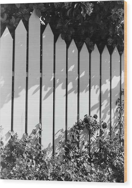 A Picket Fence Wood Print
