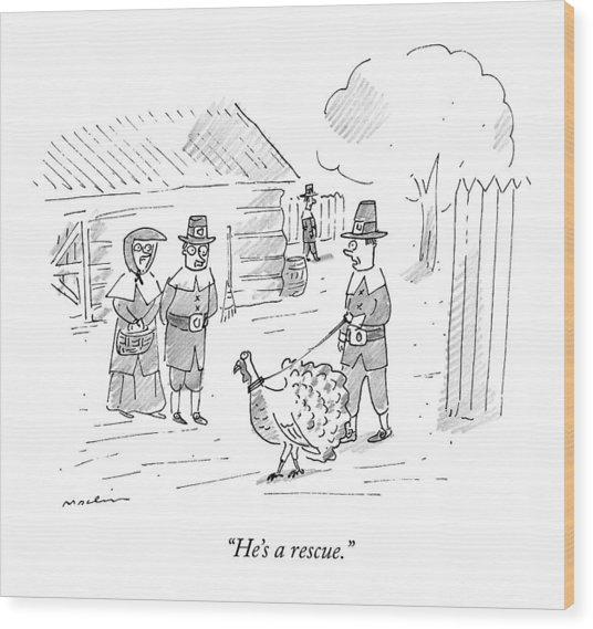 A Pilgrim Walks A Turkey On A Leash Wood Print