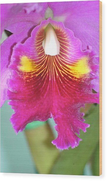 A Purple Cattelaya  Orchid Wood Print
