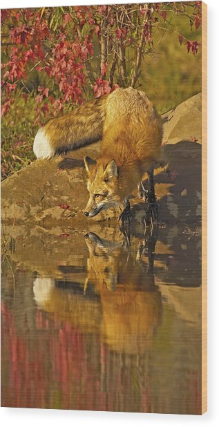 A Real Fox Wood Print