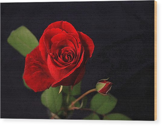 A Red Rose Wood Print by CarolLMiller Photography