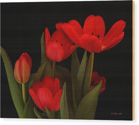 A Red Tulip Day Wood Print