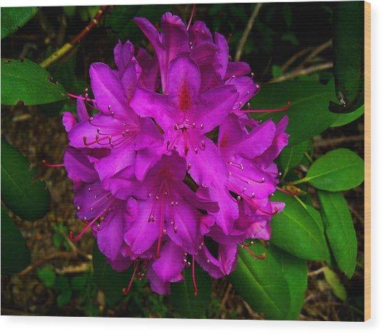 A Rody In Full Bloom Wood Print
