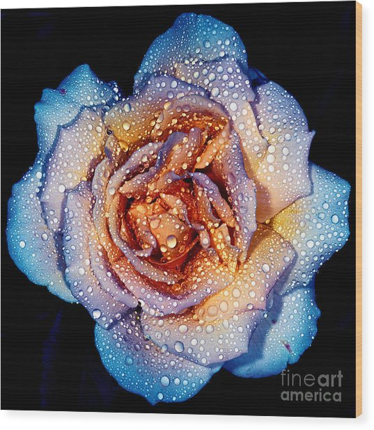 A Rose By Any Other Colour Wood Print