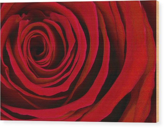 A Rose For Valentine's Day Wood Print