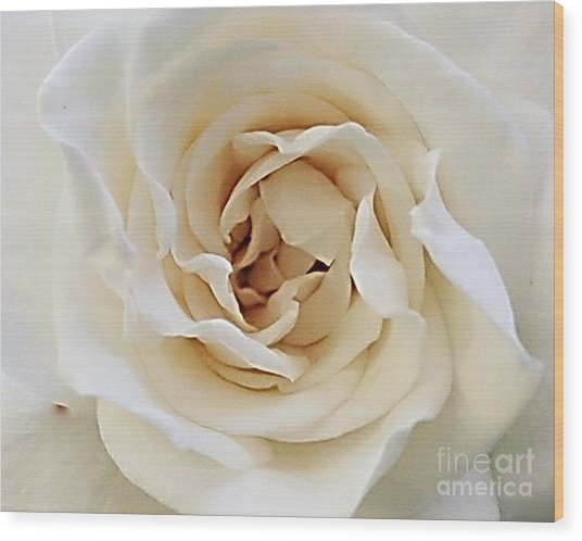 A Rose Is A Rose Wood Print