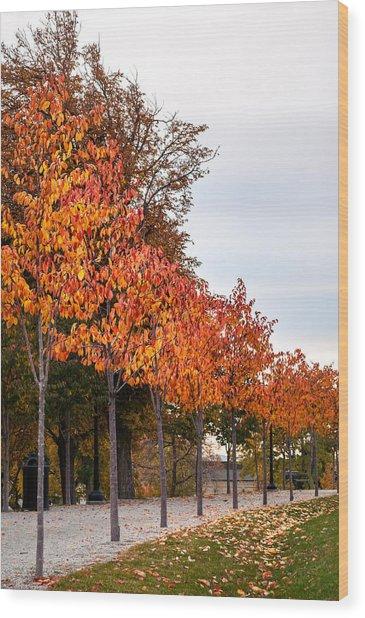 A Row Of Autumn Trees Wood Print