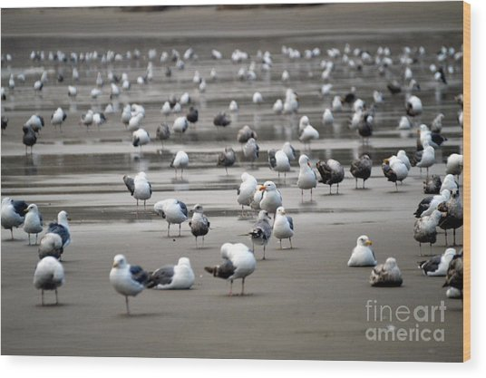 A Seagulls Life Wood Print by Sheldon Blackwell