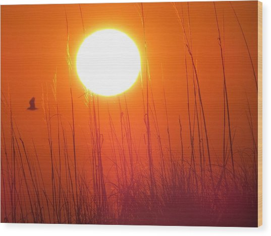 A Seagull's Sunrise Wood Print