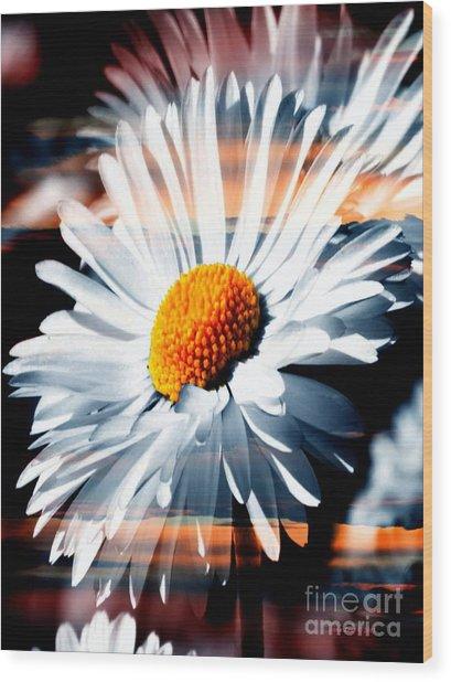 A Simple Daisy Wood Print