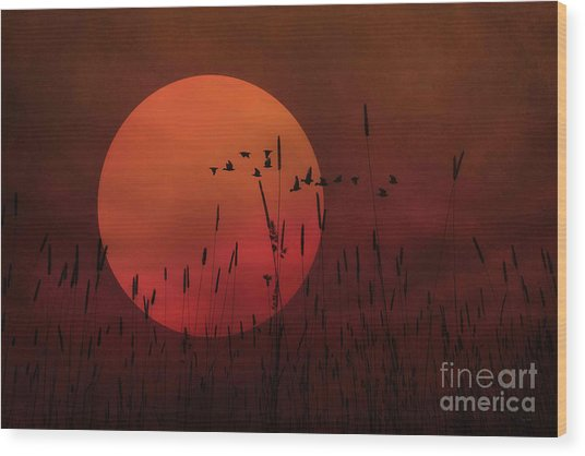 A Simple Sunset In June Wood Print by Tom York Images