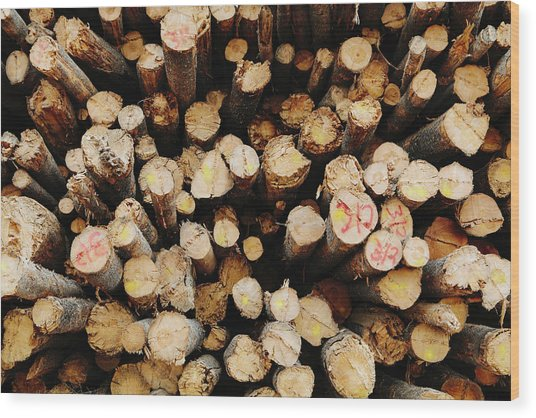 A Stack Of Cut Timber Logs, Lodge Pole Wood Print