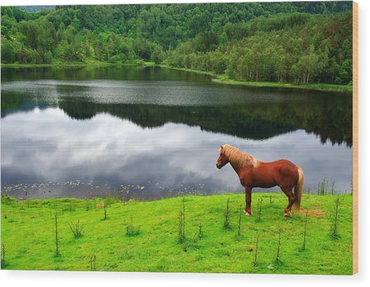 A Stallion Watching His Kingdom Wood Print