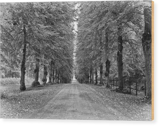 A Straightforward Path Wood Print