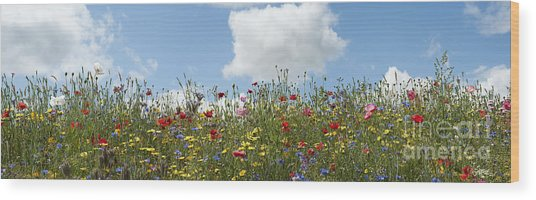 A Summers Day Wood Print by Tim Gainey