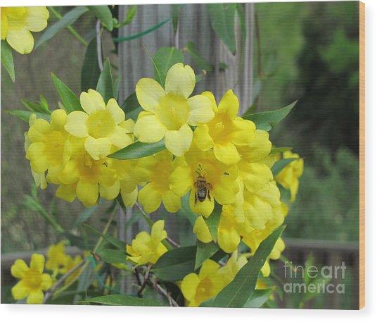 A Taste Of Yellow Wood Print