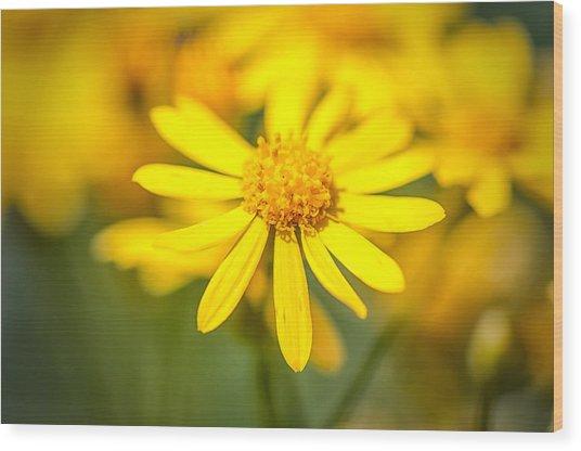 Texas Wildflower 2 Wood Print