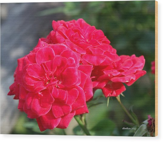 A Thorny Rose Wood Print