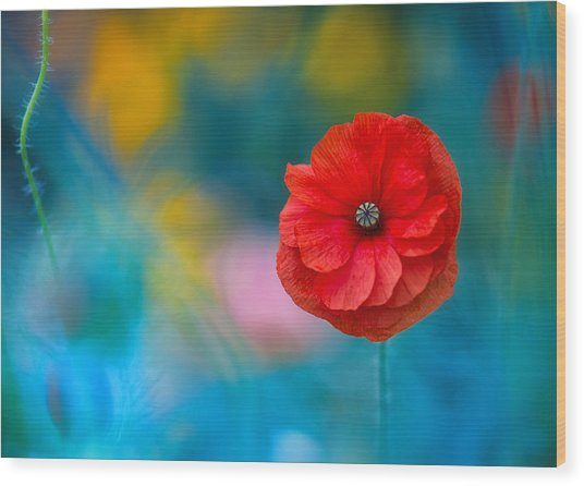A Touch Of Poppy Magic Wood Print