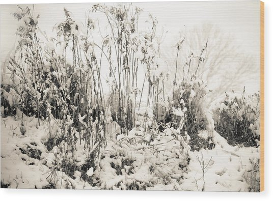 A Touch Of Snow Wood Print by Nancy Edwards