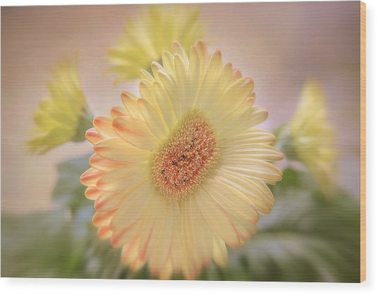 A Touch Of Sunshine Wood Print by Fiona Messenger