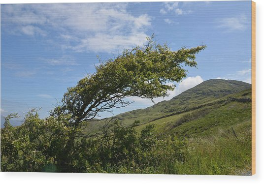 A Tree Bent By The Wind Wood Print