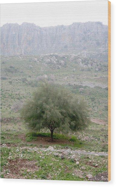A Tree In Israel Wood Print