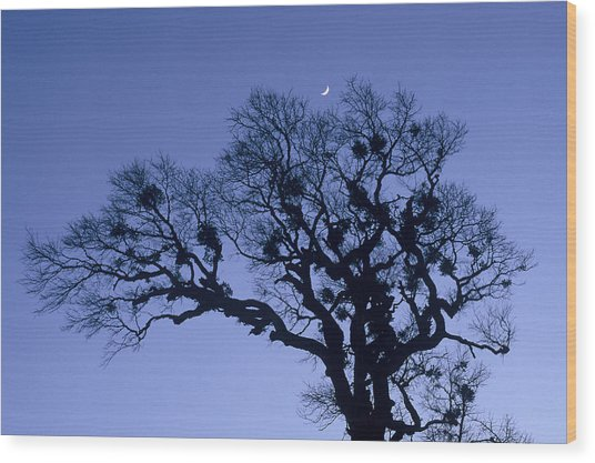 A Tree Is An Object Of Beauty X Wood Print