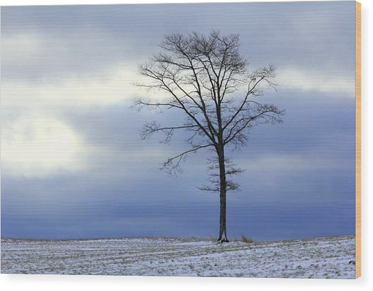 A Tree On A Field Of Snow Wood Print