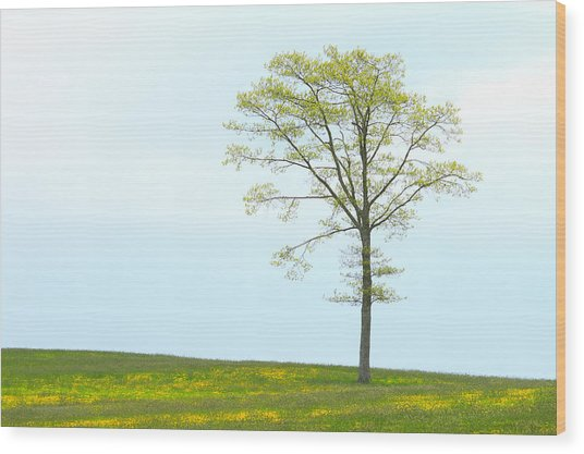 A Tree On A Hill Of Wildflowers Wood Print