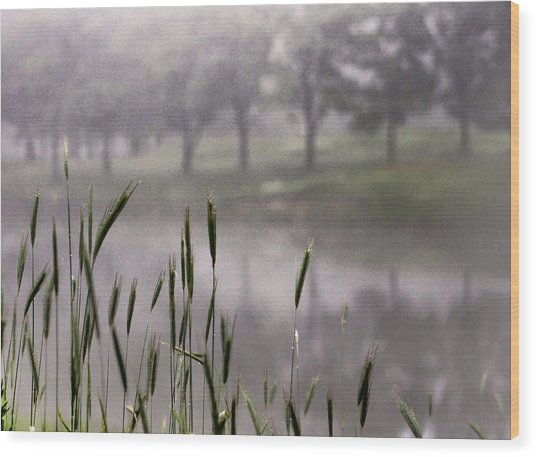 A View In The Mist Wood Print