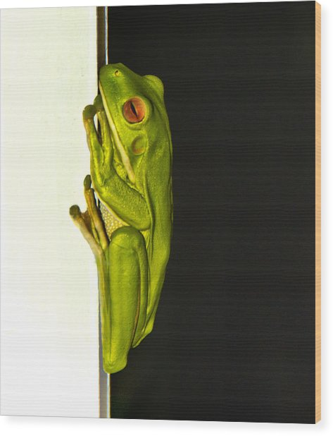 A Visit From A Giant Tree Frog Wood Print by Debbie Cundy