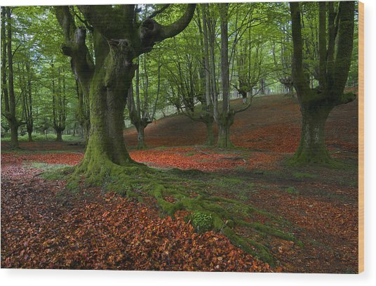 A Walk In The Forest Wood Print by Marilar Irastorza